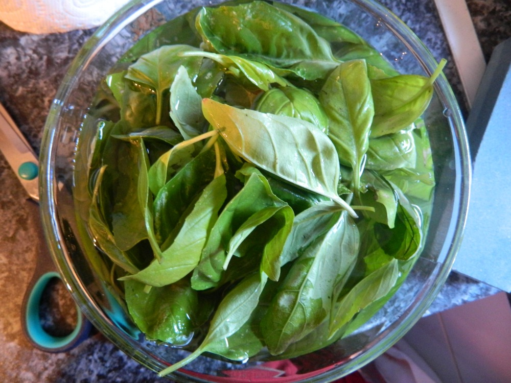 fresh basil_homemade pesto